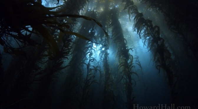 """California Dreaming"": A Cinematic Short Film Of Coastal Marine Life By Howard Hall (2014)"