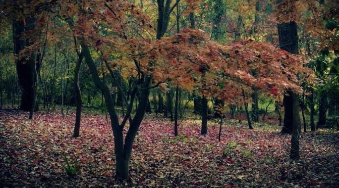 """Flowering Deer"": A Cinematic Music Video For Folk Singer Matt Bauer Directed By Gareth Smith & Jenny Lee (2012)"