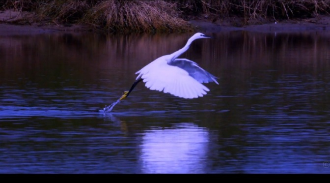 """Heron's Dance"": A Cinematic Short Film In Sardinia Directed By Hans Leysieffer (2013)"