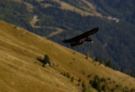 We Love To Fly Cinematic Paragliding Short Film Directed By Paul Doppler 2014