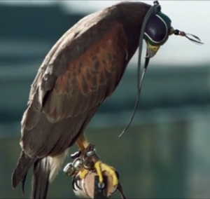 Rufus, The Wimbledon Hawk