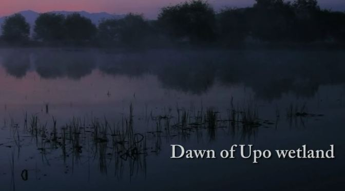 """Dawn Of Upo Wetland"": A Cinematic Short Film In South Korea Directed By HJ. Song (2011)"