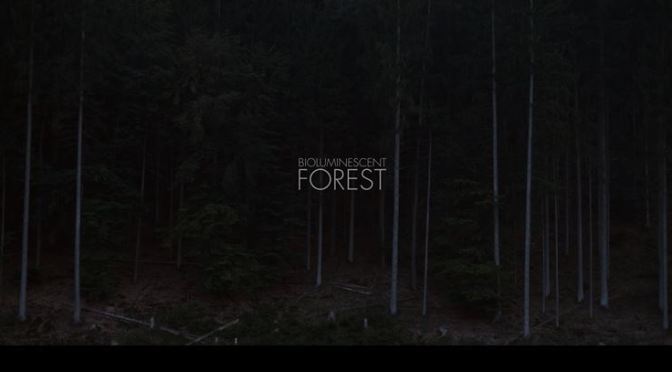 """Projections In The Forest"": A Cinematic Creative Short Film By Friedrich Van Schoor & Tarek Mawad (2014)"
