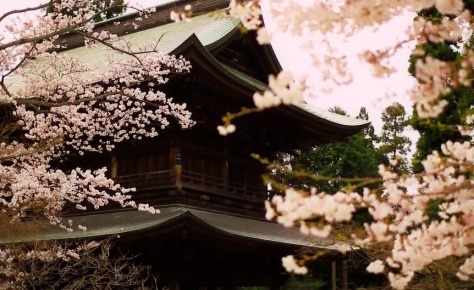 Scenic Beauty cinematic short film of Springtime in Japan directed by Norichika Fueta 2010
