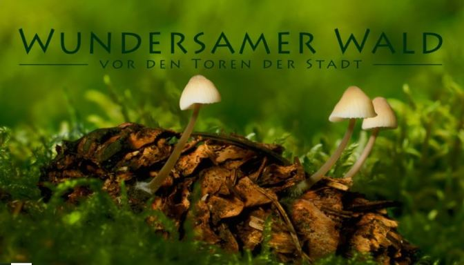 """Wundersamer Wald"": A Cinematic Time-Lapse Short Film In Berlin By Thomas Knauer (2015)"