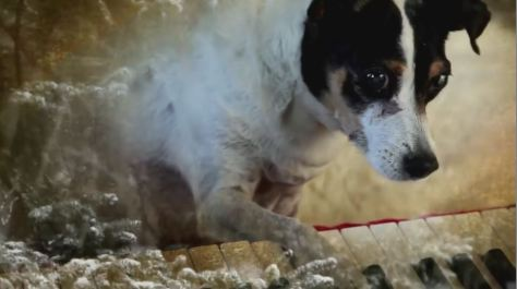 Heart Of A Dog Cinematic Poem Short Film Trailer Written and Directed by Laurie Anderson 2015