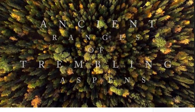 """Ancient Ranges Of Trembling Aspens"": A Cinematic Aerial Short Film In Canada Directed By Marty Mellway (2016)"