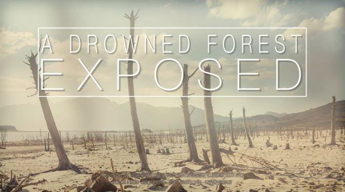 """A Drowned Forest Exposed"": A Cinematic Time-Lapse Short Film In South Africa Directed By Liesel Kershoff (2017)"