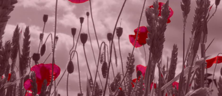 In Flanders Fields Cinematic Poem Short Film Directed by Tim Mountain 2017