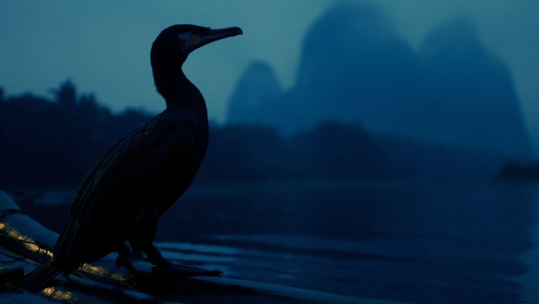 Cormorant Fishermen Cinematic Poem Short Film In China Directed By Alexander Alexandrov (2019)